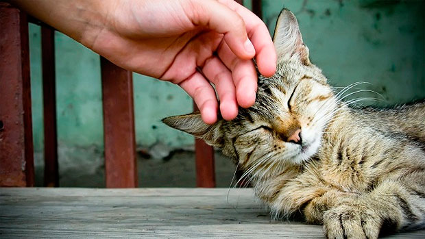 gato ronroneo