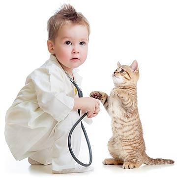 El sida en los gatos mascotas foyel for El sida se contagia por saliva