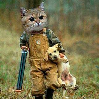 Conducta cazadora gatos