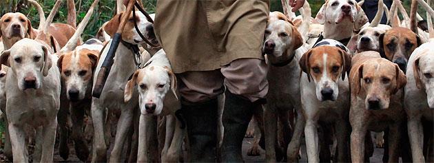 Conducta cazadora perros
