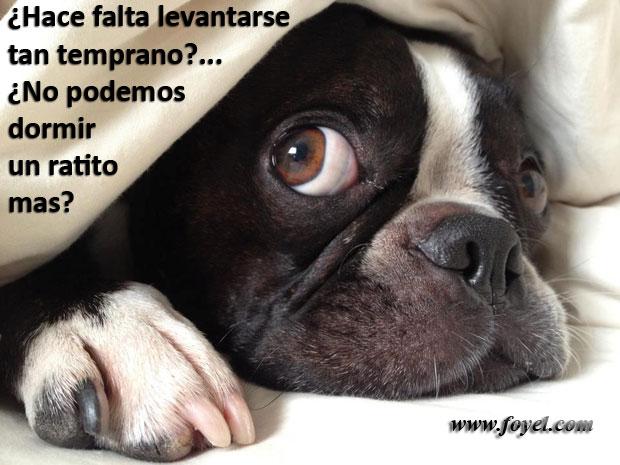 Perros también sueñan
