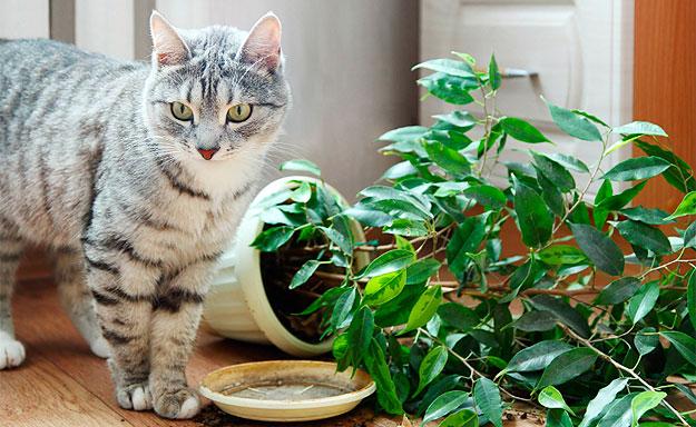 Resultado de imagen de foto planta toxica gato
