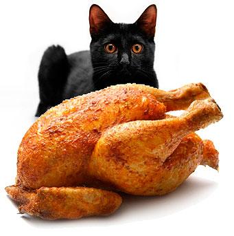 Como cambiar la dieta a nuestro gato y no morir en el intento