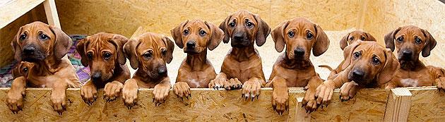 Vacunas perros y vacunas gatos