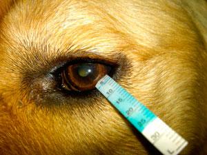 Cornea Real Cat Eye What Is It