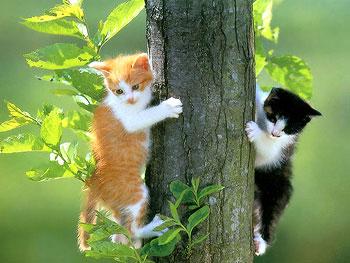 Algunos consejos para bajar un gato del arbol mascotas foyel - Trepadores para gatos ...