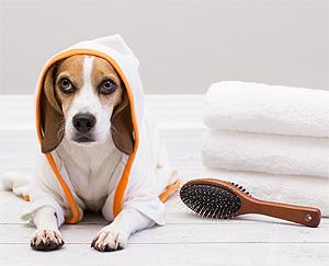 8369c741cae0 Con que frecuencia y con que debo bañar a mi perro - Mascotas Foyel