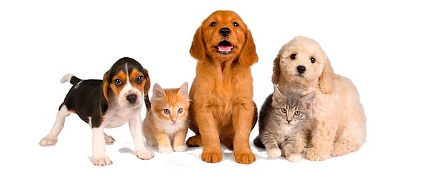 Foyel portal con todo para tus mascotas y animales share - Todo para nuestras mascotas ...